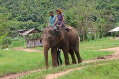 大象公园 免版税库存照片