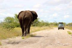大象公牛接近的汽车在Etosha纳米比亚非洲 免版税库存图片