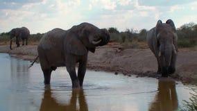 大象关闭沐浴在waterhole博茨瓦纳 股票录像