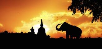 大象剪影在泰国 免版税库存图片