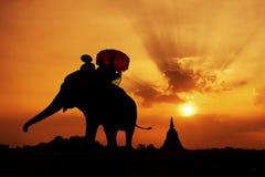 大象剪影 免版税库存照片