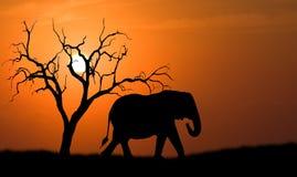 大象剪影 图库摄影