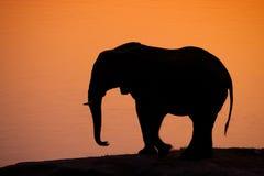 大象剪影 库存照片