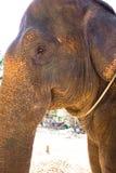 大象力量 库存照片