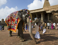 大象印度寺庙thanjavur 免版税图库摄影