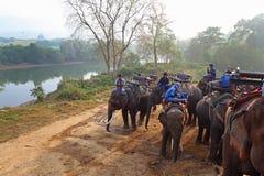 大象司机在河岸的 库存图片