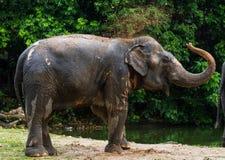 大象吹的沙子 免版税库存照片