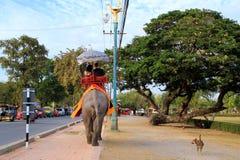 大象和狗在步行 库存照片