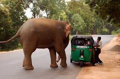 大象和自动人力车 免版税库存照片