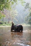大象和mahout在河 免版税库存照片