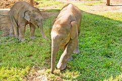 大象在农场使用 免版税库存照片