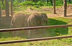 大象在农场使用 库存图片