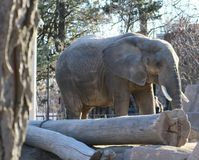 大象在密尔沃基 免版税图库摄影