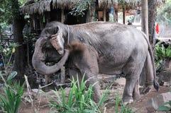 大象在密林 图库摄影