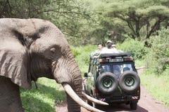 大象在徒步旅行队的横穿路 免版税库存图片