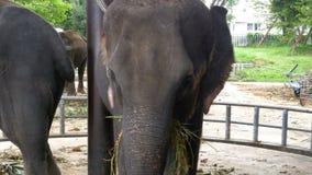 大象在有一个推车的动物园在后面吃着 泰国 聚会所 股票视频