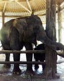 大象在机盖下 免版税图库摄影