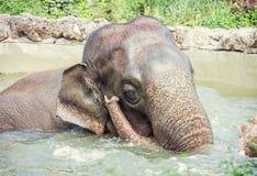 大象在水,减速火箭的过滤器中的采取一个刷新的垂度 库存照片