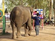 大象在游人前面的戏剧球在t的指导下 免版税库存照片
