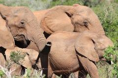 大象在阳光下 免版税库存图片