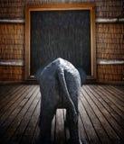 大象学校动物园 免版税库存图片
