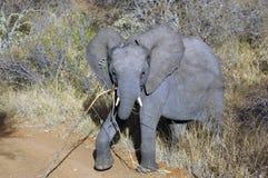 大象孩子 库存图片