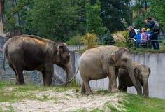 大象家庭在动物园里 免版税库存照片