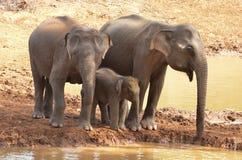 大象家庭在河的 免版税图库摄影