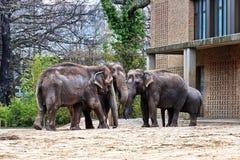 大象家庭,马赛马拉自然保护,肯尼亚,非洲 免版税图库摄影