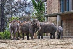 大象家庭,马赛马拉自然保护,肯尼亚,非洲 免版税库存照片
