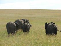大象家庭以绿色 免版税库存照片
