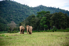 大象家庭 库存图片