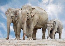 大象家庭 库存照片