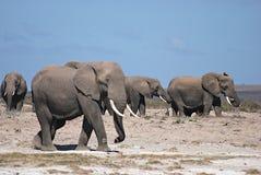 大象家庭  免版税图库摄影