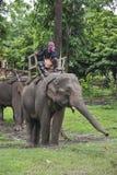 大象密林游览 免版税库存照片