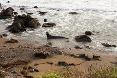 大象封锁海岸 图库摄影