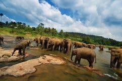 大象小组在河 免版税图库摄影