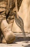 大象尾标 免版税库存照片