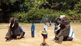 大象展示在泰国 免版税图库摄影