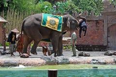 大象展示在巴厘岛,印度尼西亚 免版税库存照片
