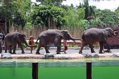 大象展示在巴厘岛,印度尼西亚 免版税库存图片