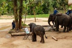 大象展示 免版税库存照片