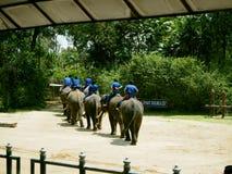 大象展示Nakhonpathom,泰国 免版税库存图片