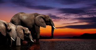 大象幻想 图库摄影