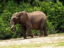 大象强大强大 免版税库存图片