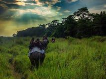 大象徒步旅行队在Chitwan,尼泊尔 免版税库存照片