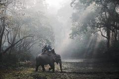 大象徒步旅行队在Chitwan,尼泊尔 免版税库存图片