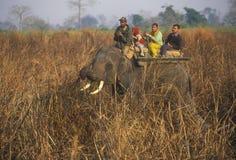 大象徒步旅行队 免版税库存图片