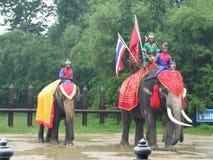 大象显示泰国 免版税库存图片