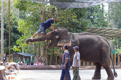 大象显示 免版税库存照片
